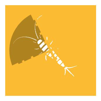 Targeting Silverfish Pest Control | Silverfish Exterminators Cox Pest Control